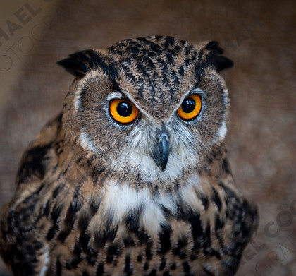 mhc-can 813 d246 